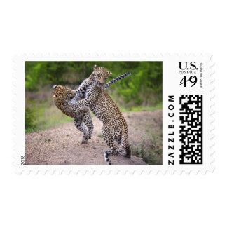 Sabi Sands Conservancy, Mpumalanga Province, Postage Stamp