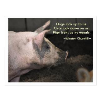 Sabiduría del cerdo - iguales postal