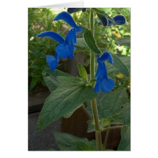 Sabio azul de Salvia del jardín Tarjeta De Felicitación