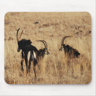 Sable antelopes resting mouse pad