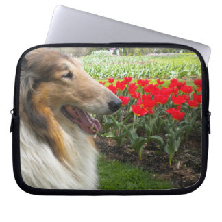 Sable Collie N Red Tulips Laptop Sleeve