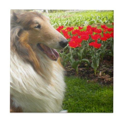 Sable Collie N the Tulips Tile Trivet