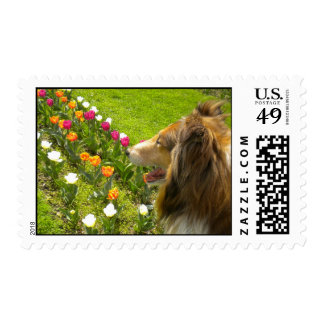 Sable Collie & the Tulips Postage