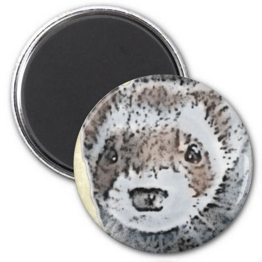 Sable Ferret Picture 2 Inch Round Magnet