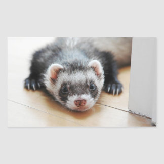 Sable Ferret Rectangular Sticker