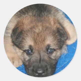 "Sable GSD Puppy ""Jack"" Classic Round Sticker"