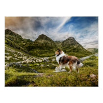 Sable Rough Collie and Lamb herding Sheep - Poster
