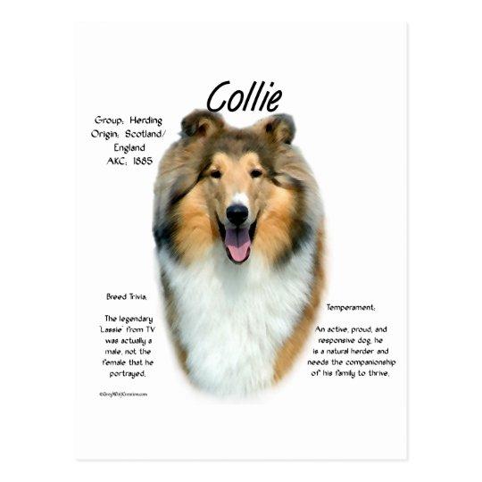 Sable Rough Collie Meet the Breed Postcard