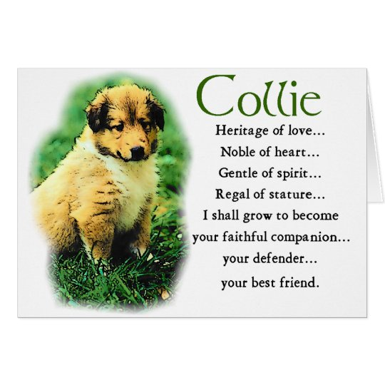 Sable Rough Collie Puppy Gifts Card
