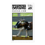 Sable Saanen Goats Postage Stamps