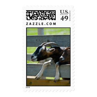 Sable Saanen Goats Stamps