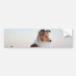 Sable Shetland Sheepdog Bumper Sticker