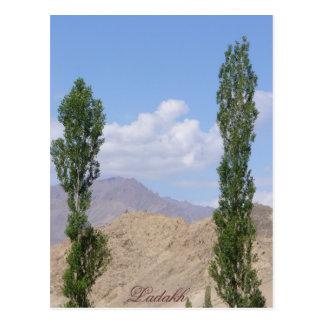 Saboo Ayu. Ladakh, India Postcard