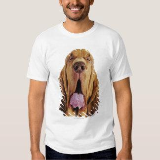 Sabueso (perro del St. Huberto) con los ojos Camisas