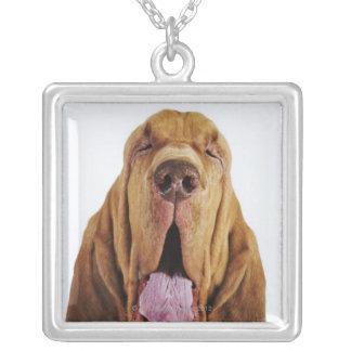 Sabueso (perro del St. Huberto) con los ojos cerra Grimpola Personalizada