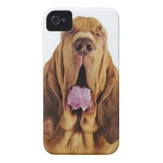 Sabueso (perro del St. Huberto) con los ojos cerra iPhone 4 Carcasas