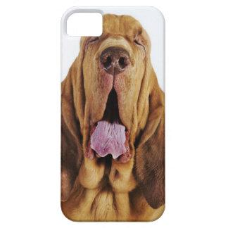Sabueso (perro del St. Huberto) con los ojos cerra iPhone 5 Case-Mate Protectores