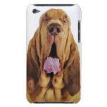 Sabueso (perro del St. Huberto) con los ojos cerra Barely There iPod Coberturas