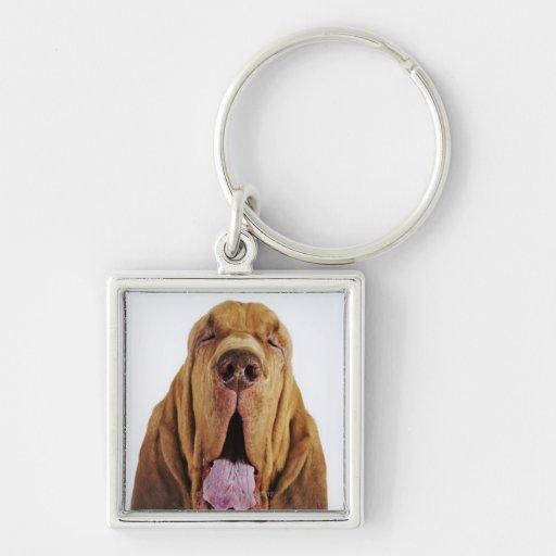 Sabueso (perro del St. Huberto) con los ojos Llavero Cuadrado Plateado