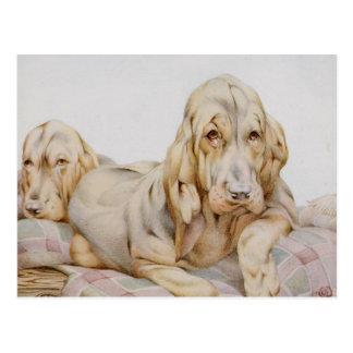 Sabuesos lindos del vintage, perros de perrito por tarjeta postal