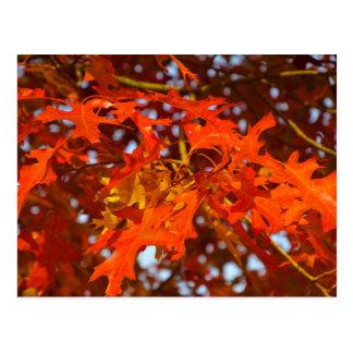 Sacramento California Fall Color Postcard
