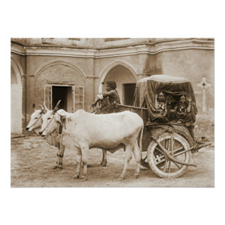 Sacred Bullocks Pulling Carriage of Nautch Girls Posters