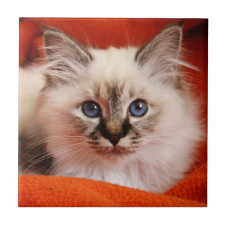 Sacred cat of Burma (Sacred Birman kitten) Tile