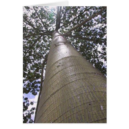 Sacred Ceiba Tree Cards