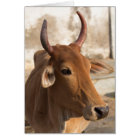 Sacred Cow Portrait Card