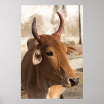 Sacred Cow Portrait Poster