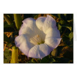 Sacred Datura Flower Desert Wildflower Card
