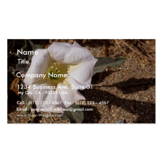 Sacred Datura Flower From Anza Borrego Desert Double-Sided Standard Business Cards (Pack Of 100)