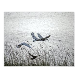Sacred ibises in flight card