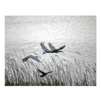 Sacred ibises in flight custom invitations