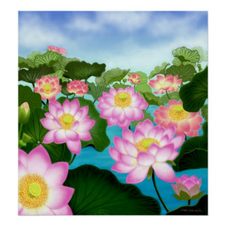 Sacred Lotus Flowers Poster