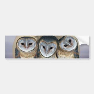 Sacred owls bumper sticker