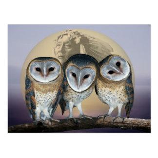 Sacred owls postcard