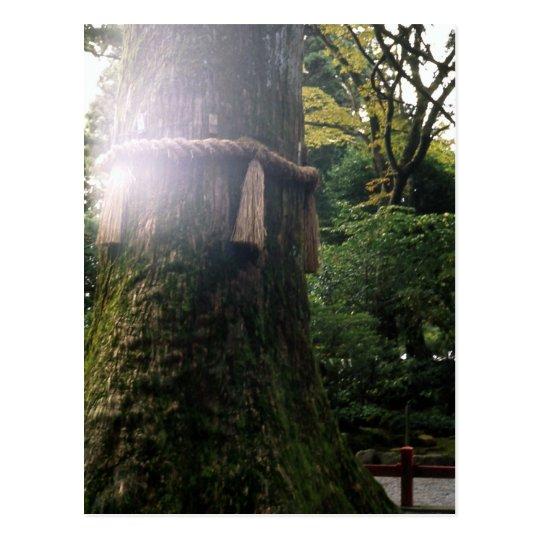 Sacred tree Hakone shrine Japan Postcard