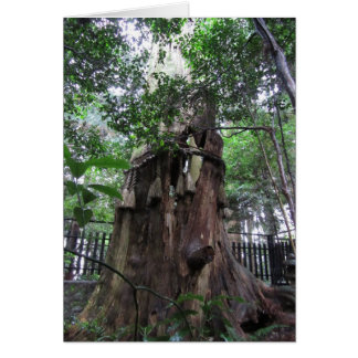 Sacred Tree on Mt. Kurama Greeting Card