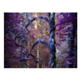 Sacred Tree Post Card