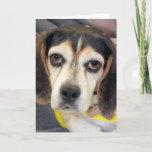 Sad Beagle Photo Card