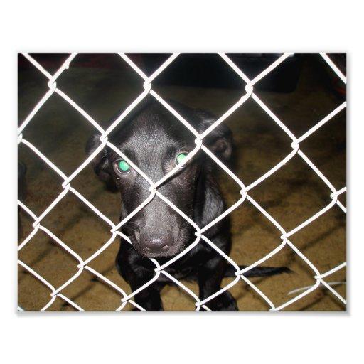 Sad Black Dog Behind Fence in Dog Pound Photo