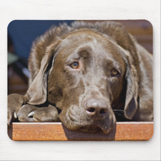 Sad Chocolate Lab Mouse Pad