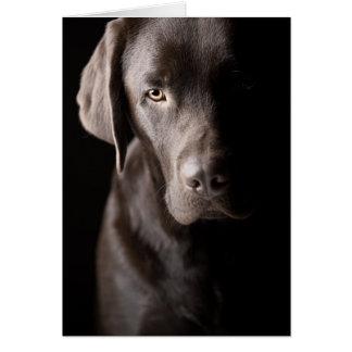 Sad Chocolate Labrador Greeting Card