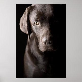 Sad Chocolate Labrador Puppy Poster