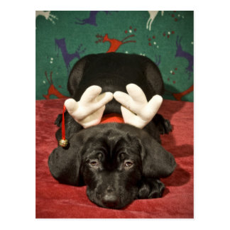 Sad Christmas pup Postcard