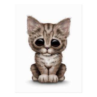 Sad Cute Brown Tabby Kitten Cat on White Postcard