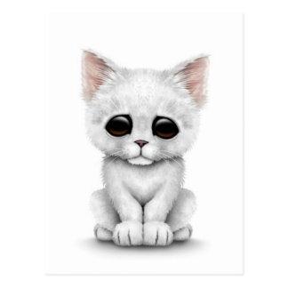 Sad Cute White Kitten Cat on White Postcard