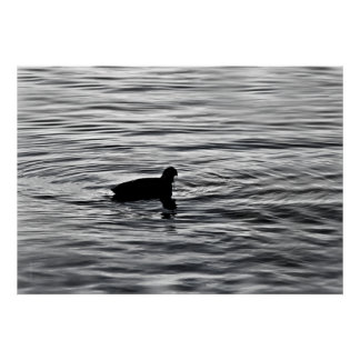 sad duck poster