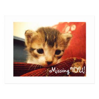 Sad Face Kitten Missing You Postcard